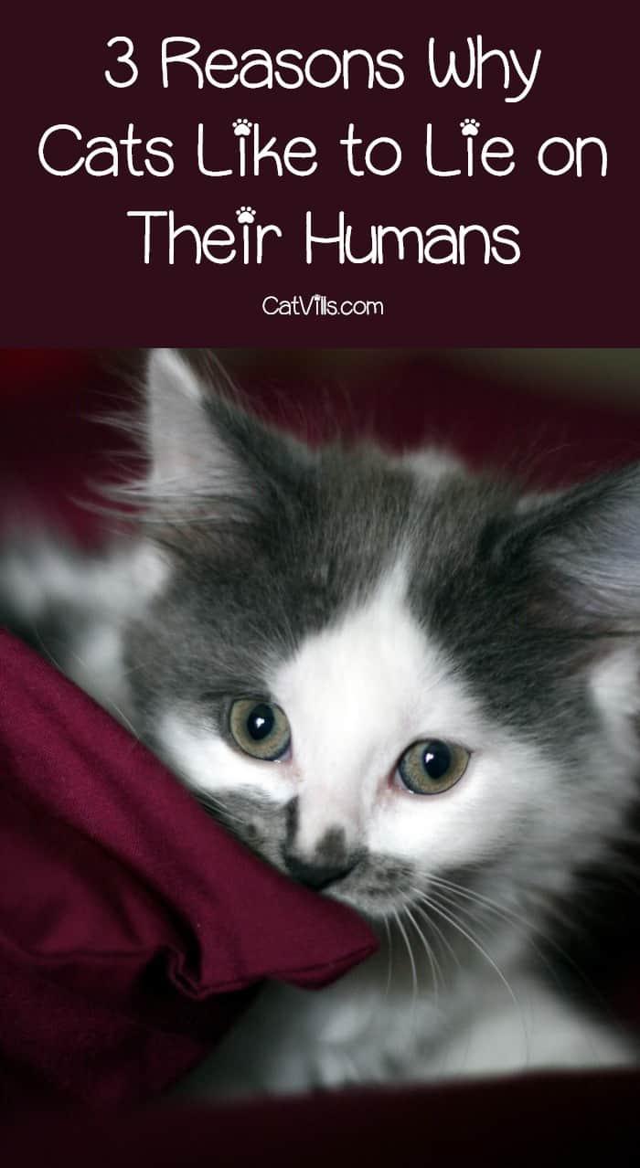 all about cat behavior pdf