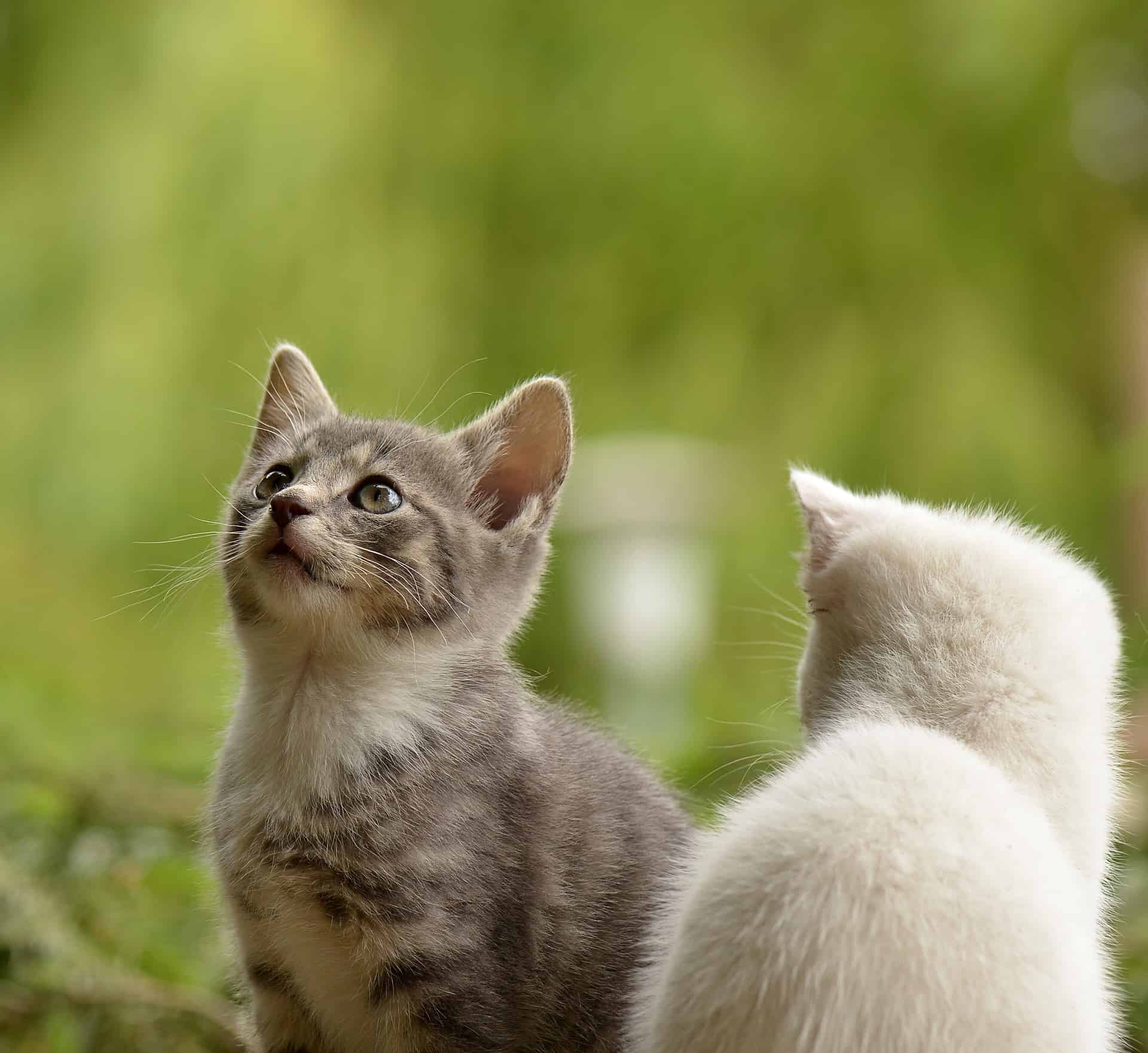 20 of the Cutest Kittens You've Ever Seen