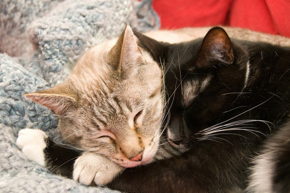 """The Surprising Answer to the Question """"Do Cats Give Hugs"""""""