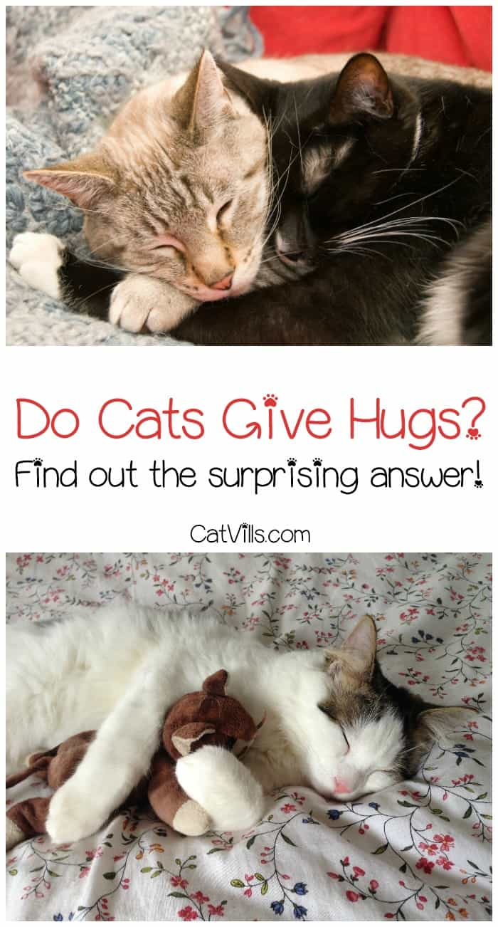 Cats have a number of ways to show affection. They rub against us, meow at us, tell us they love us through nonverbal communication, and follow us around - but do cats give hugs?