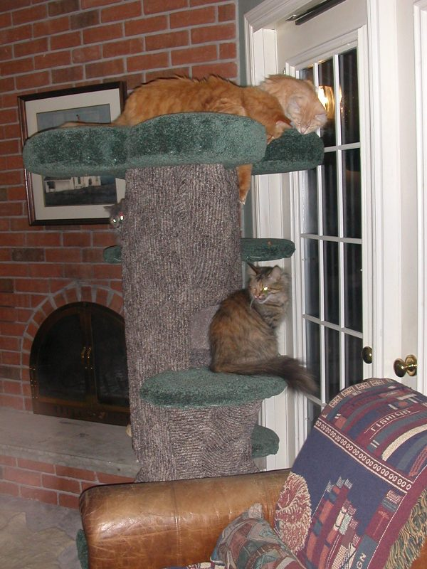 two cats sitting on their cat tree