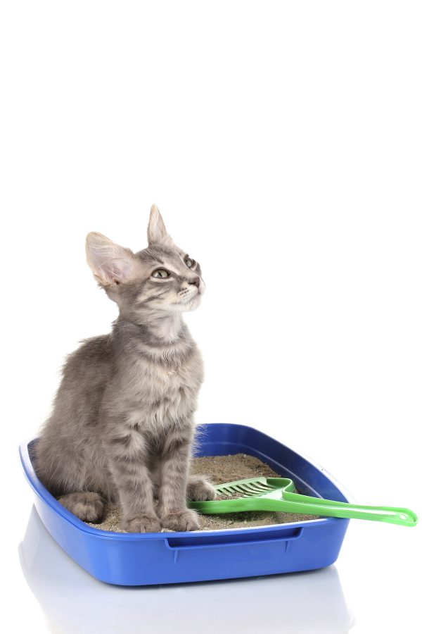 Dealing with a super stinky litter box? Check out 10 of our favorite ways to eliminate litter box odors and for all so you and kitty can live in harmony without the smell!