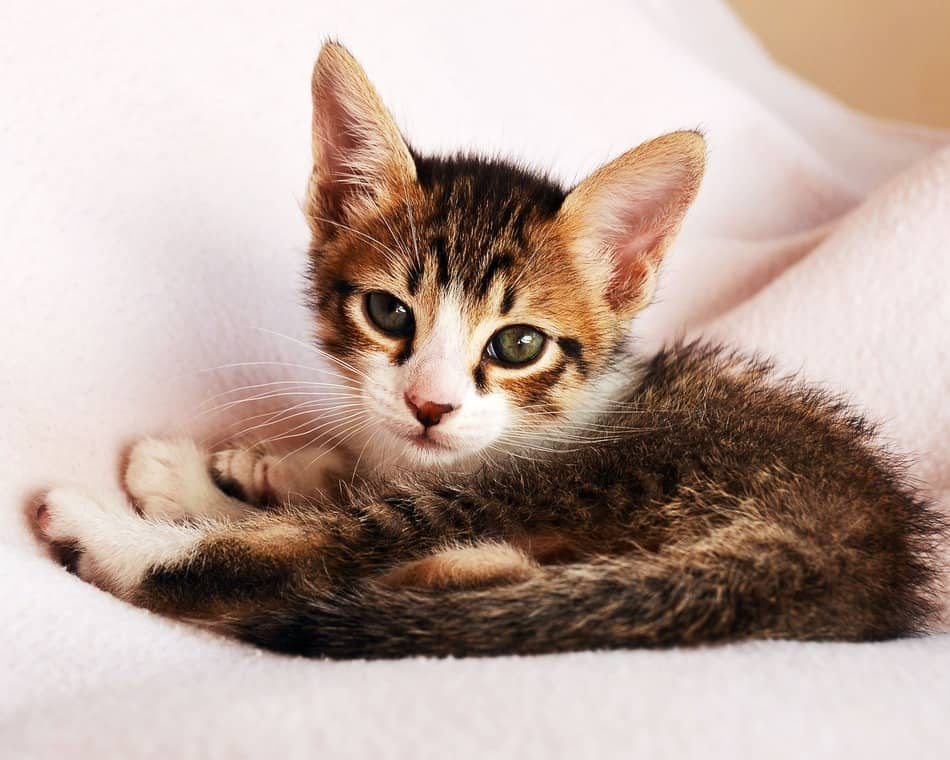 10 Reasons Why Your Cat Loves Bringing Her Kittens to Your Bed