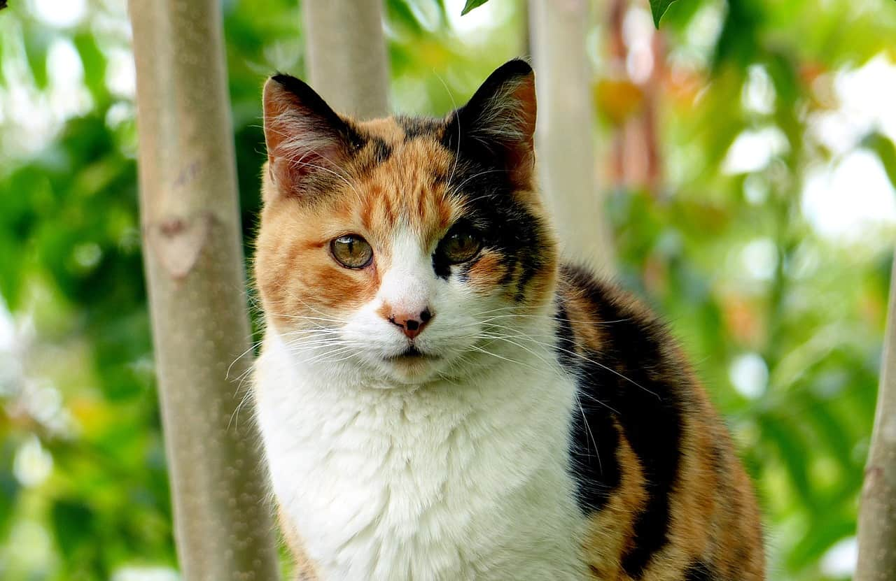 6 Things You Need To Know About Calico Kittens Catvills