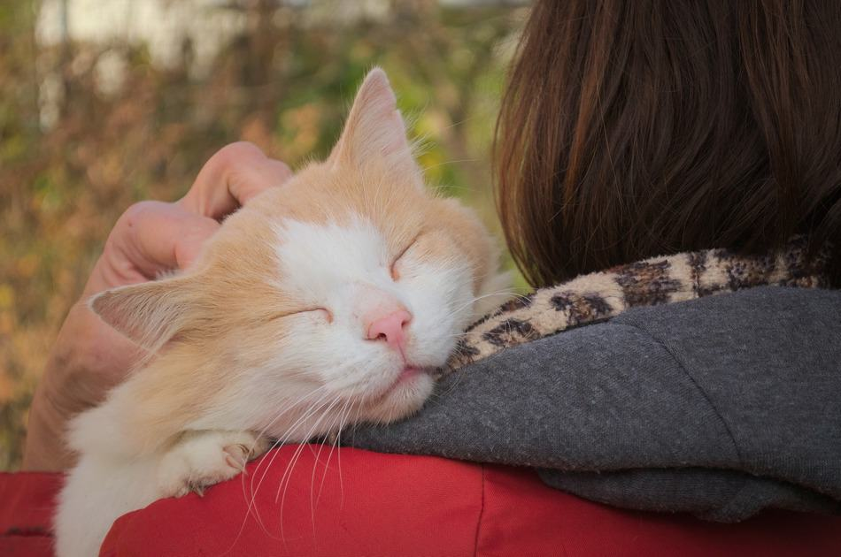 Do Cats Know That Hugs & Kisses Are Signs of Affection?