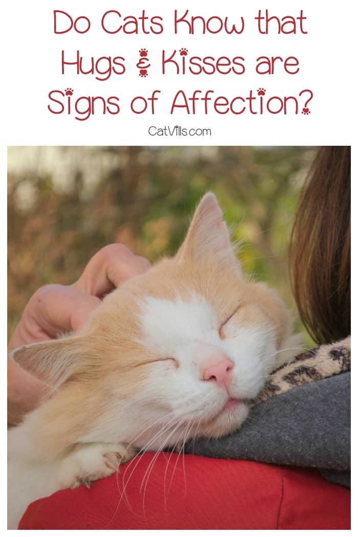 Do cats know that hugs and kisses are signs of affection from us, or do they think we're just being weird? Find out the answer, it may surprise you!