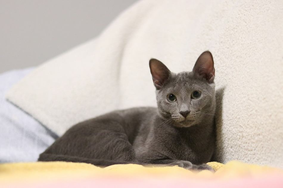 Looking for the perfect grey kitten names for your new little ball of fuzz? We love these picks! Check them out and tell us your favorite!