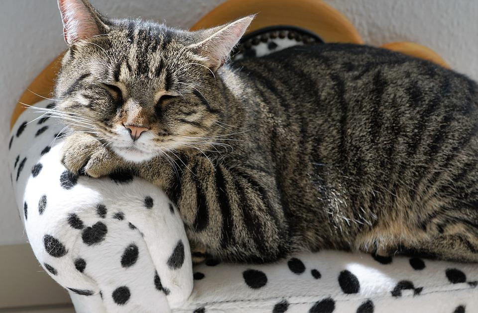 Worried that your lazy cat will gain weight from all his lounging around? Check out these six engaging activities and games that will get him playing and moving!