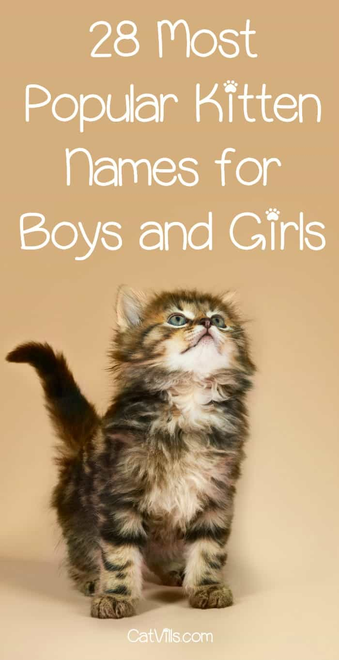 Looking for the most popular kitten names? We've rounded up 14 from each category (boys and girls) for you to check out!