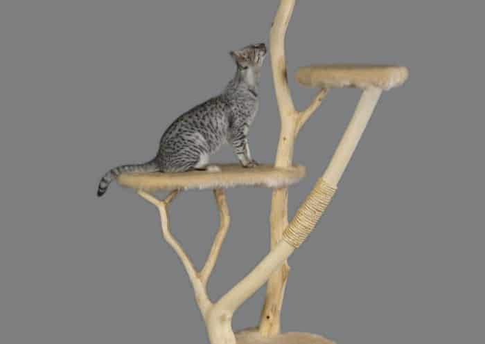 How to Train Your Cat to Use a Scratching Post