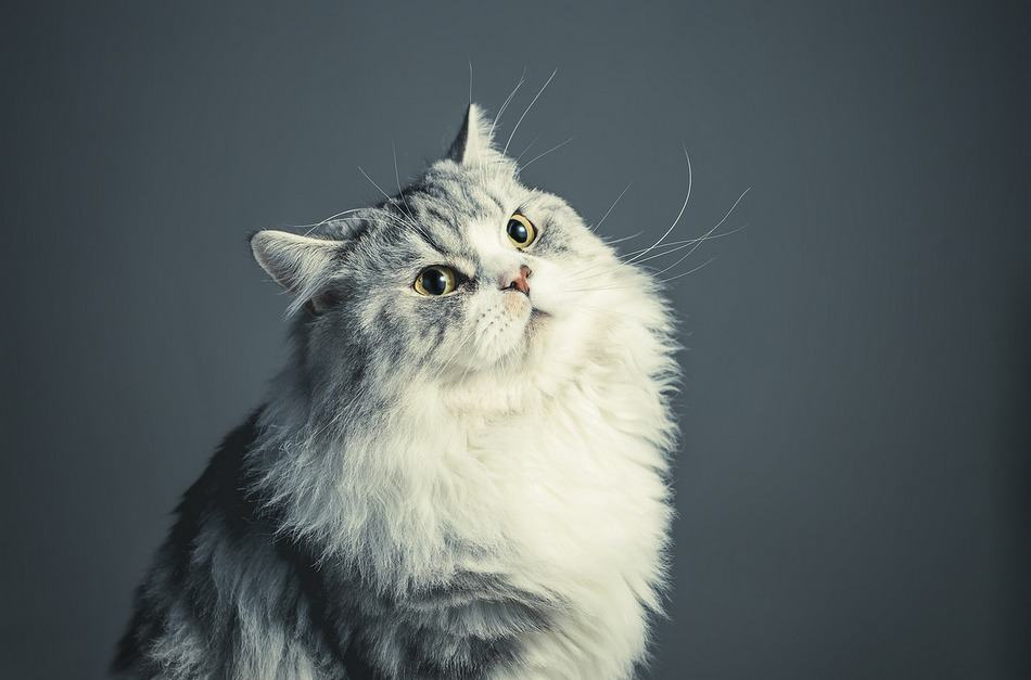 5 Awesome Tricks to Teach Your Cat