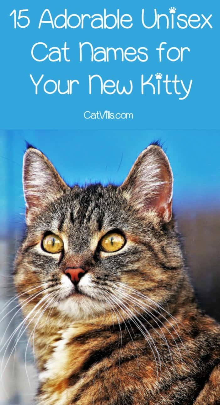 Coming up with unisex cat names is a lot harder than it seems, right? Sure, there are a million darling male cat names and even more sweet female cat names, but what if you are looking for a name that is gender neutral? We've got you covered! Check these out!