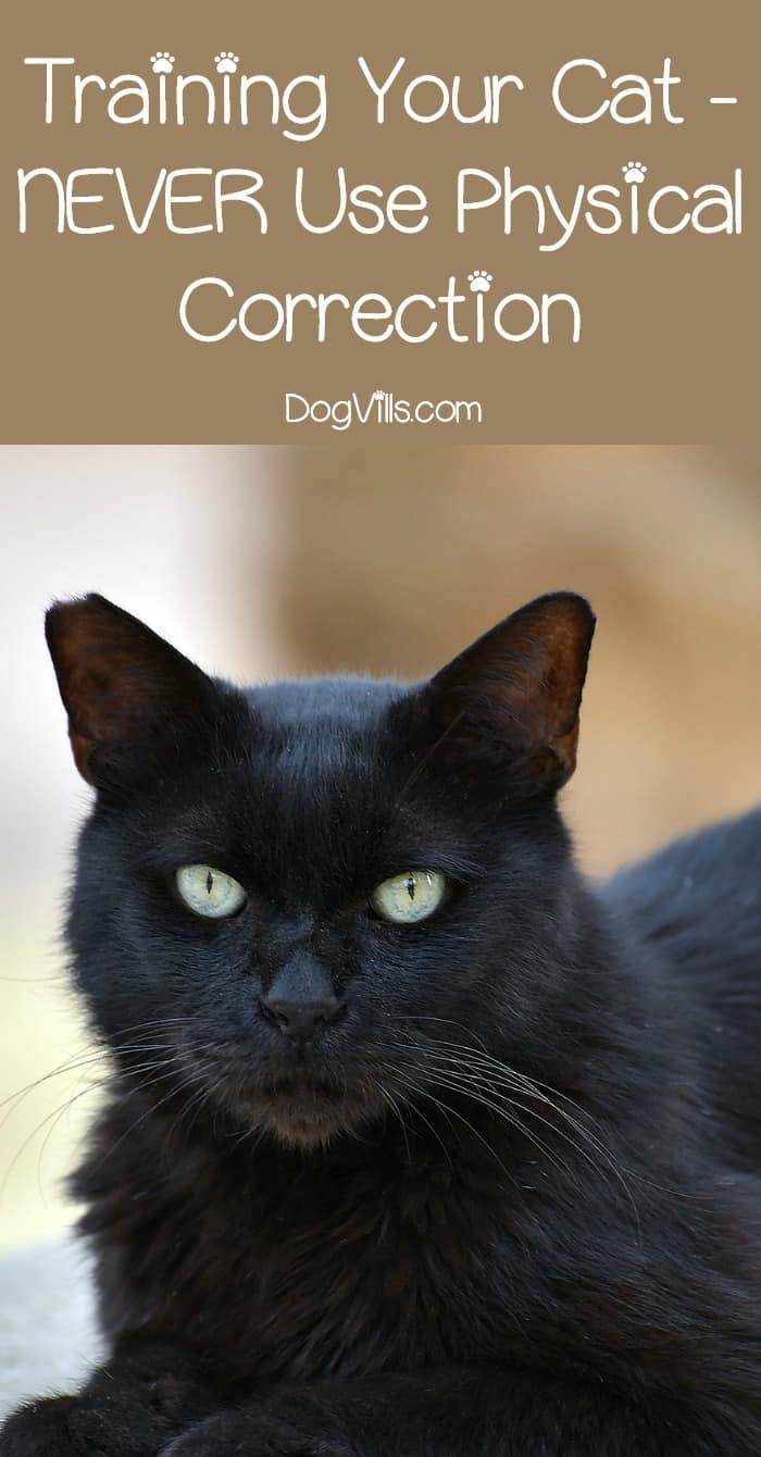 Training your cat can be frustrating. Cats may be intelligent, but they are also stubborn. Whatever you do, when you're training a cat you must not use physical correction. Learn why this is such a bad idea!