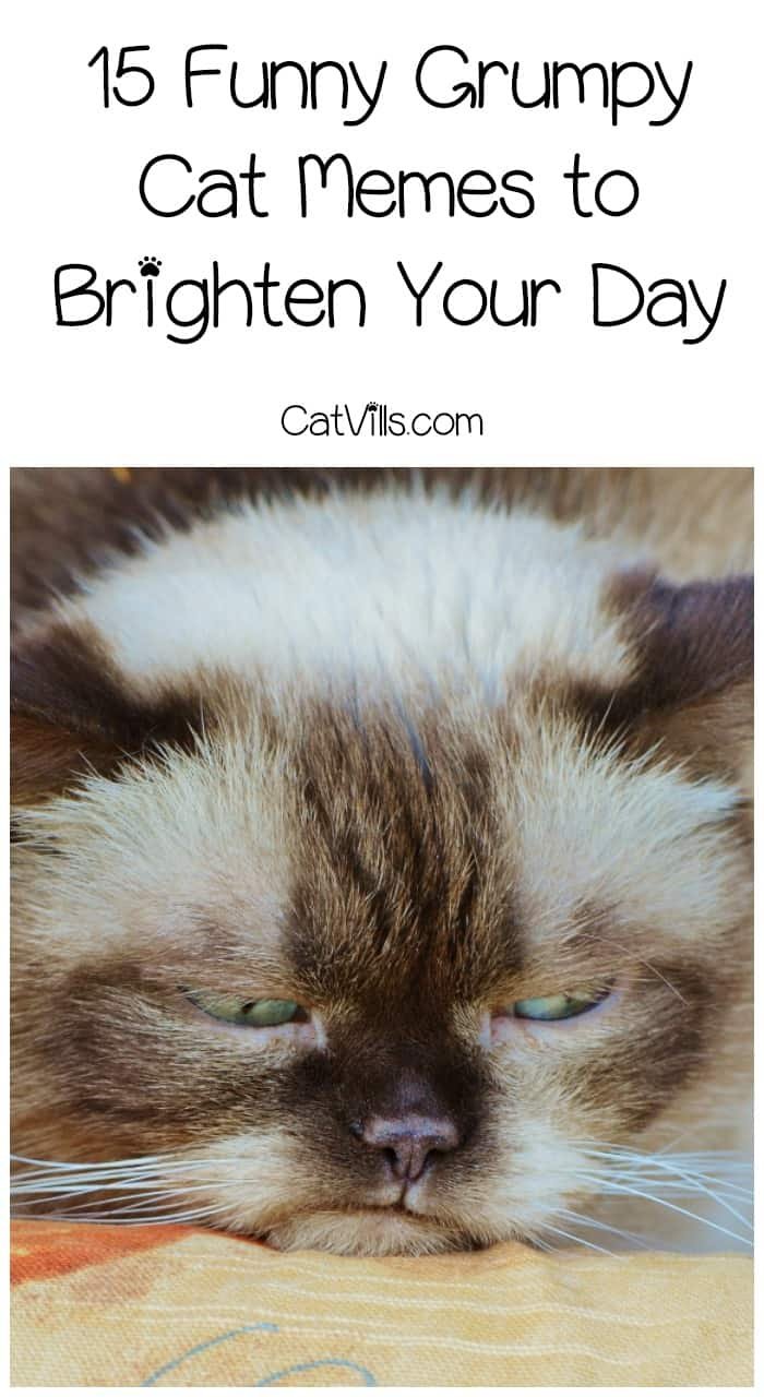 Do you love funny Grumpy Cat memes as much as I do? I've been a fan of the grouchiest cat on the internet ever since I first saw her. If you're looking for a little cat humor to brighten your day (and who isn't?), check out 15 of my favorite Grumpy Cat Memes!