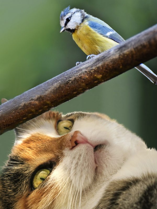 a cat spotting a yellow and blue bird on her head