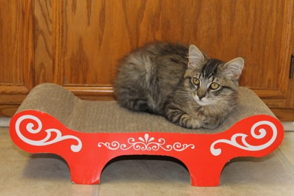 Catit Scratcher and Bench