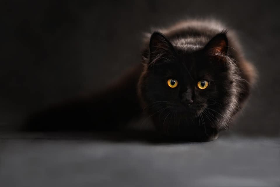 20 Absolutely Adorable & Hilarious Black Cat Names
