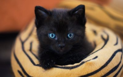 20 Darling Halloween Names for Black Cats