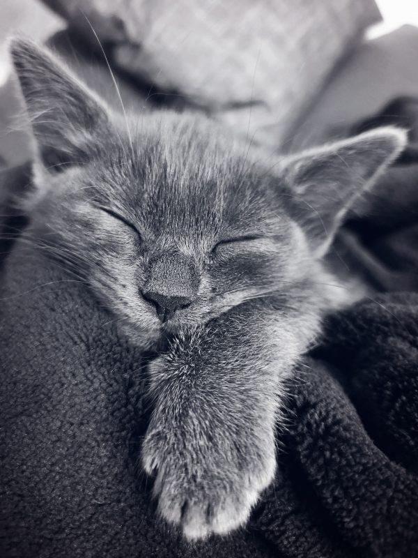 gray cat sleeping tight