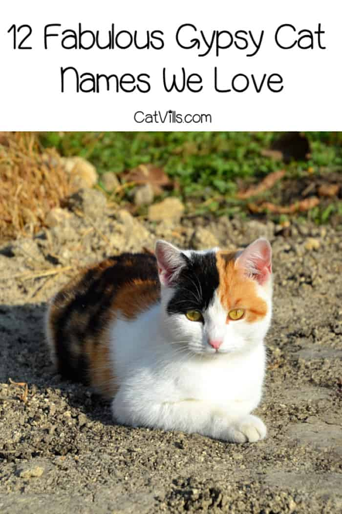 Looking for some beautiful gypsy cat names to honor your heritage?Check out these 12 fabulous names for male and female cats!