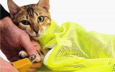 The Top 5 Cat Grooming Harnesses (These Will Make Your Task a Lot Easier)