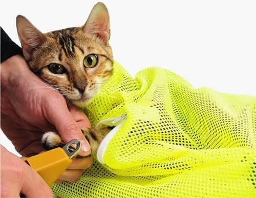 If it's a struggle to clip your cat's nails or bathe and groom them, you need one of these top 5 cat grooming harnesses! Check them out!