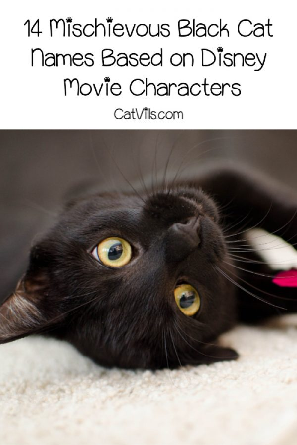 Love black cats and Disney? You're going to adore these 14 mischievous black cat names based on Disney movie characters! Check them out!