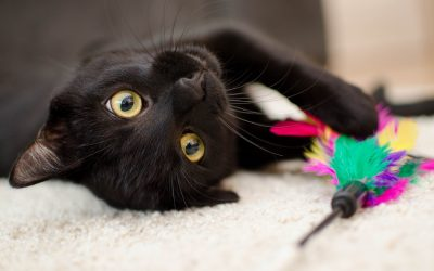 14 Mischievous Black Cat Names Based on Disney Movie Characters