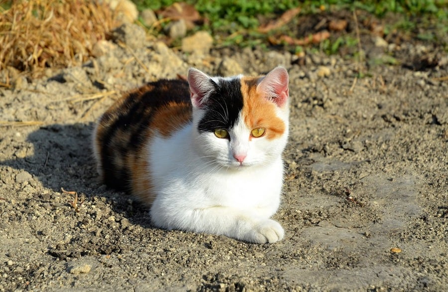12 Gypsy Cat Names That We Love