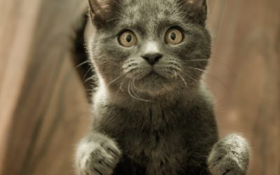 Why do cats stand on their hind legs?