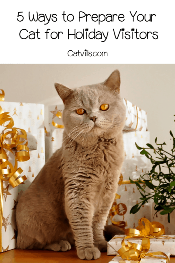 Follow these 5 tips to prepare your cat for holiday visitors to make the season (and family gatherings) a lot less stressful on both of you!
