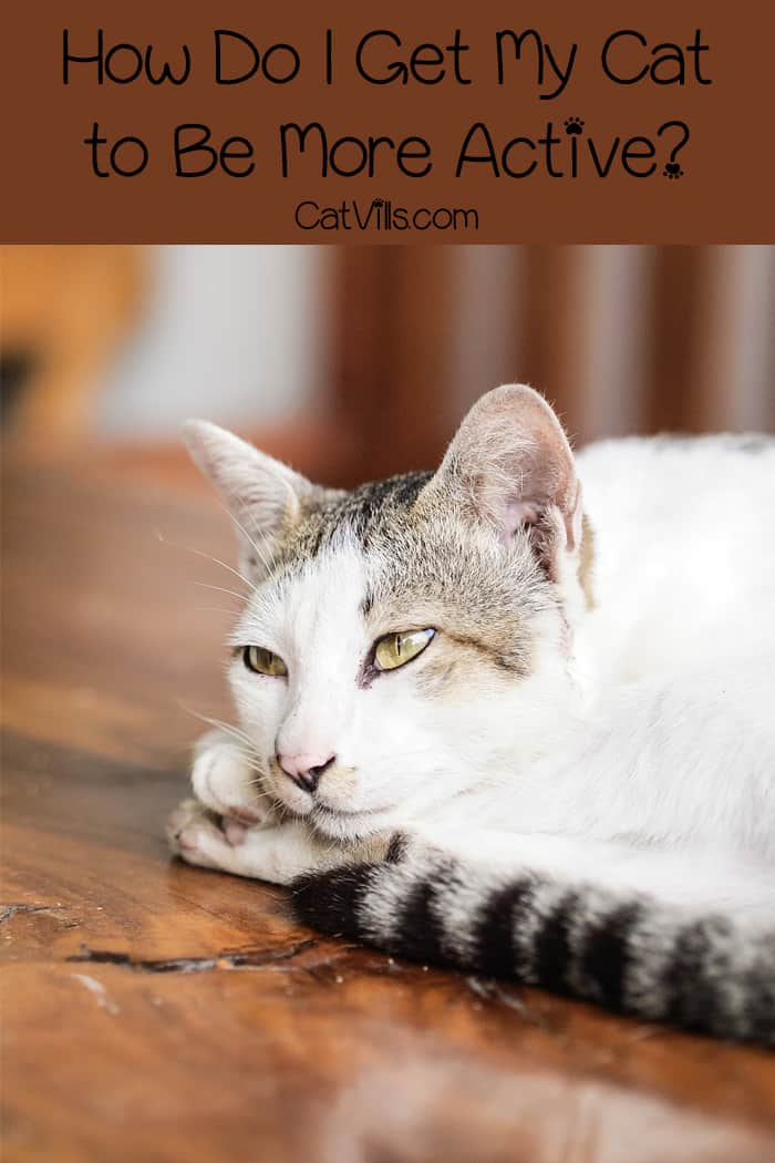 How do I get my cat to be more active? If you have a lazy cat, I bet you've asked yourself that quite a few times! Find out the answer!