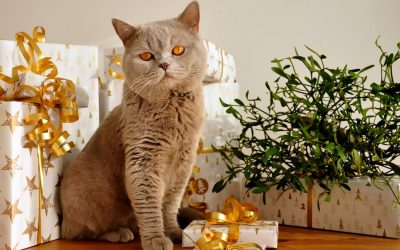 5 Ways to Prepare Your Cat for Holiday Visitors