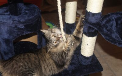 Top 5 Blue Cat Trees Both You & Your Kitty Will Love