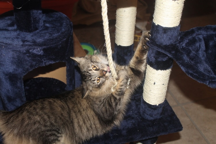 Best Large Condo: Go Pet Club Cat Tree
