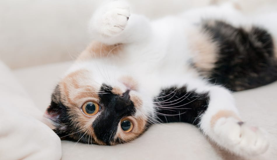 The Top 10 Cute Anime Names for Cats
