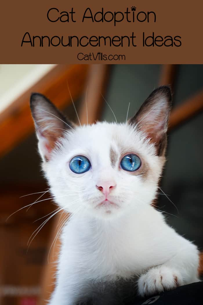 Looking for a few unique cat adoption announcement ideas? You've come to the right place! These ideas are simple, funny and adorable! Check them out!
