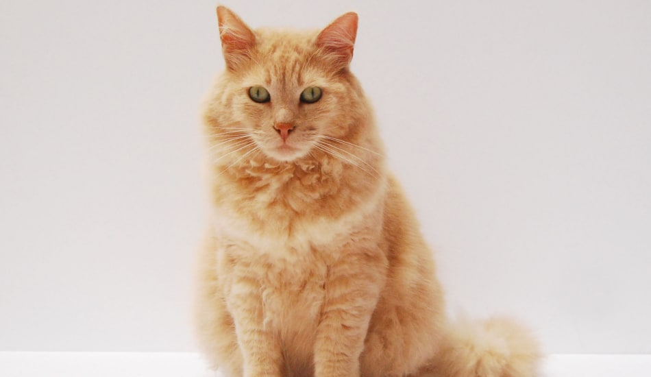 Top 10 Most Famous Cat Names in History