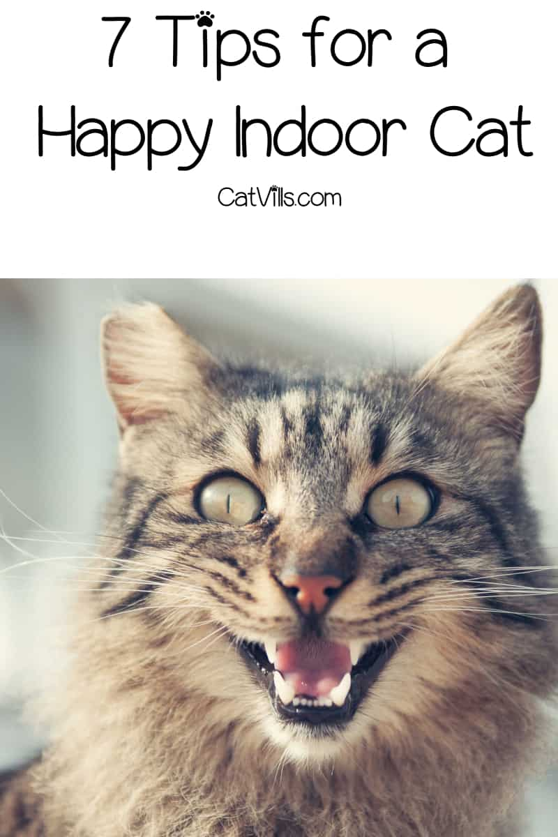 Looking for tips for a happy indoor cat? We've got you covered! Read on for 7 ways to brighten the life of your indoor kitty!
