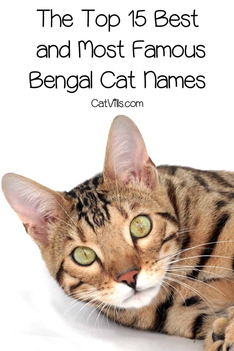 If you're looking for the best and famous Bengal cat names, you'll love our top 15 picks! Check them out!