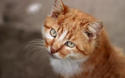 The Top 10 Names for Orange Cats