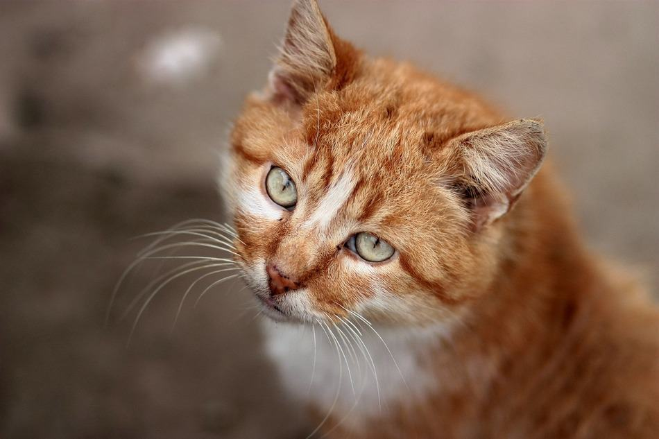 Need a little help coming up with a few perfect orange cat names for your new ginger kitty? Check out our top ten favorite ideas!