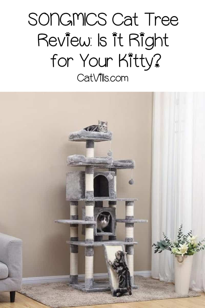 Looking for the best cat condo? Check out our SONGMICS cat tree review and see if this is the right choice for your kitty!