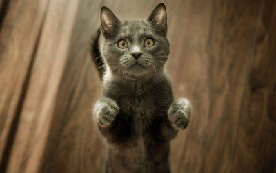 How Do You Train a Cat Not to Scratch Furniture?