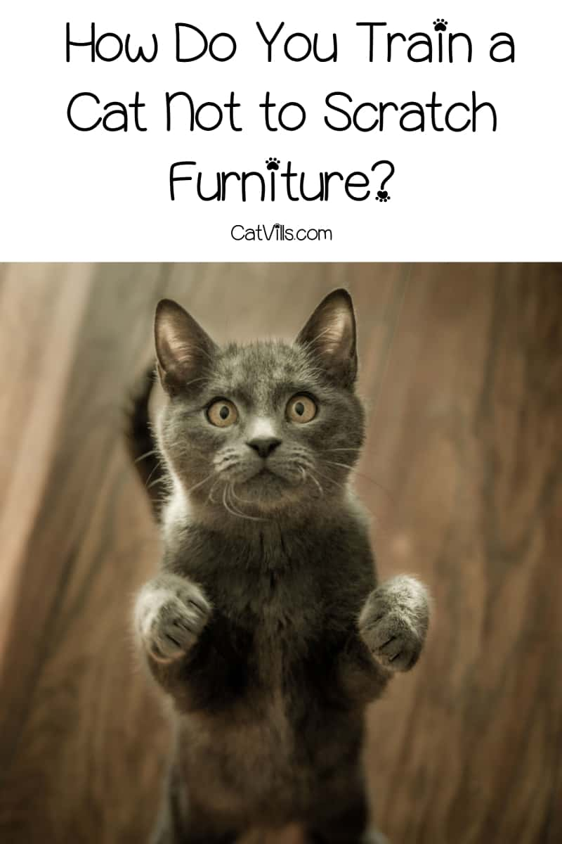 How do you train a cat not to scratch furniture? Read on for our handy guide on keeping your precious kitty from wrecking your favorite chairs & sofa!
