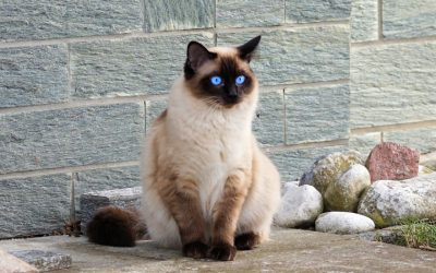 The Top 20 Names for Adventurous Cats