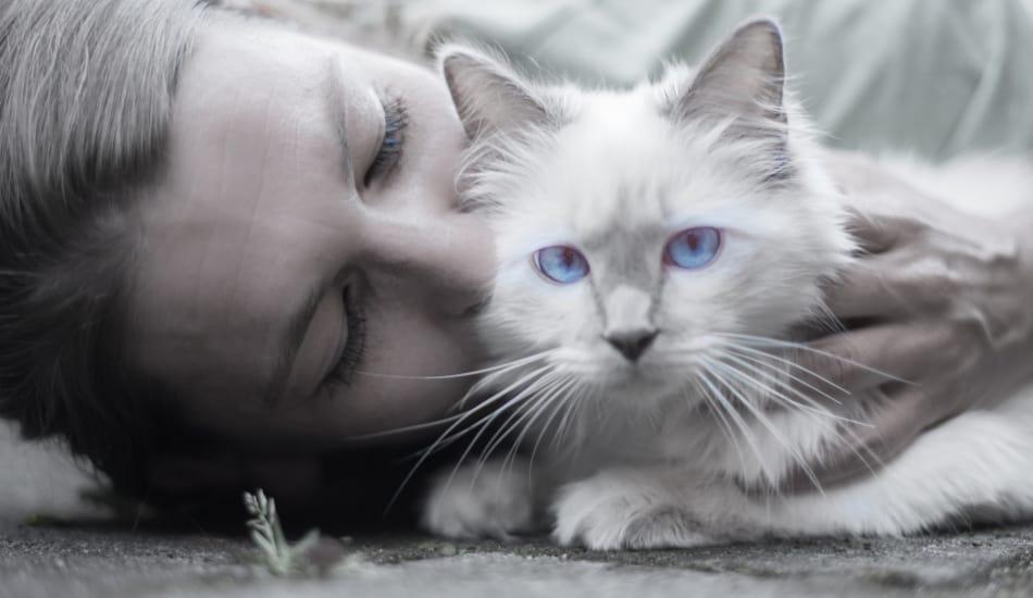 Is it OK to kiss my cat?