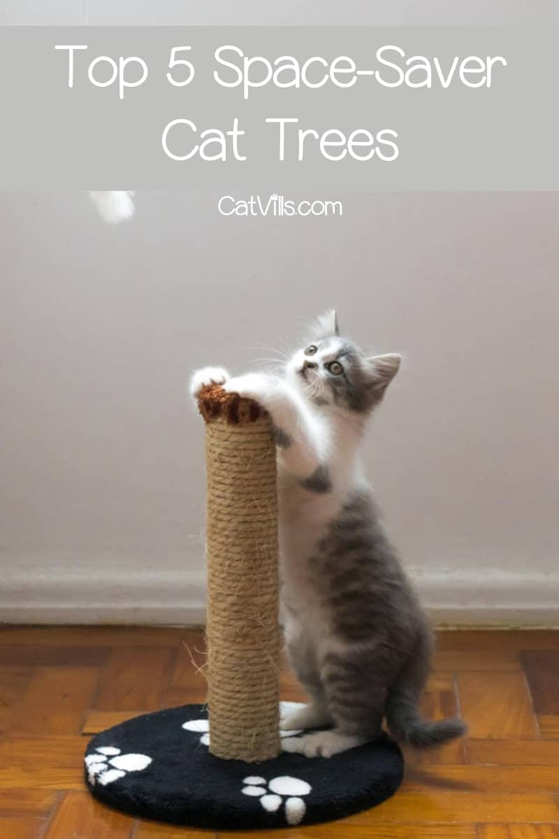 Finding space saver cat trees that don't take up half your living room is tricky business, but we pulled it off! Check out our top 5 picks!