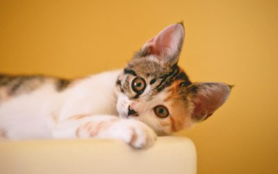 The Top 10 Celebrity Cat Names