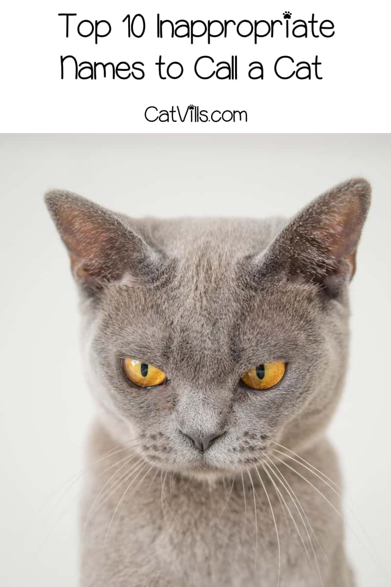 If you want to avoid being mundane, generic or even downright offensive, skip these top 10 most inappropriate cat names! Check them out!